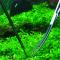 Bảo trì, vệ sinh hồ cá